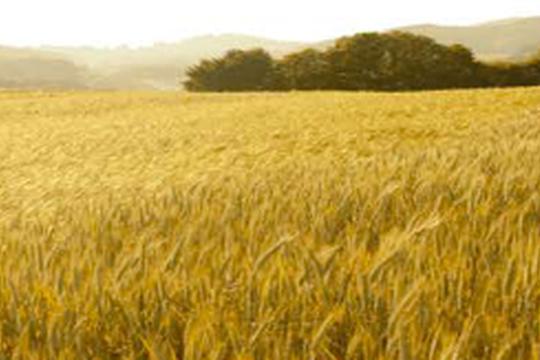 Workshop: Il paesaggio agrario tra età del Rame ed età del Ferro. Metodi di analisi delle risorse di sussistenza e delle modalità di gestione per una stima demografica. 19 Novembre 2021-online